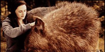 bella si lupul din twighlight
